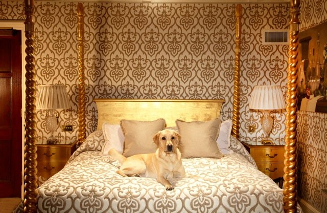 A travel company for dogs   Child friendly news