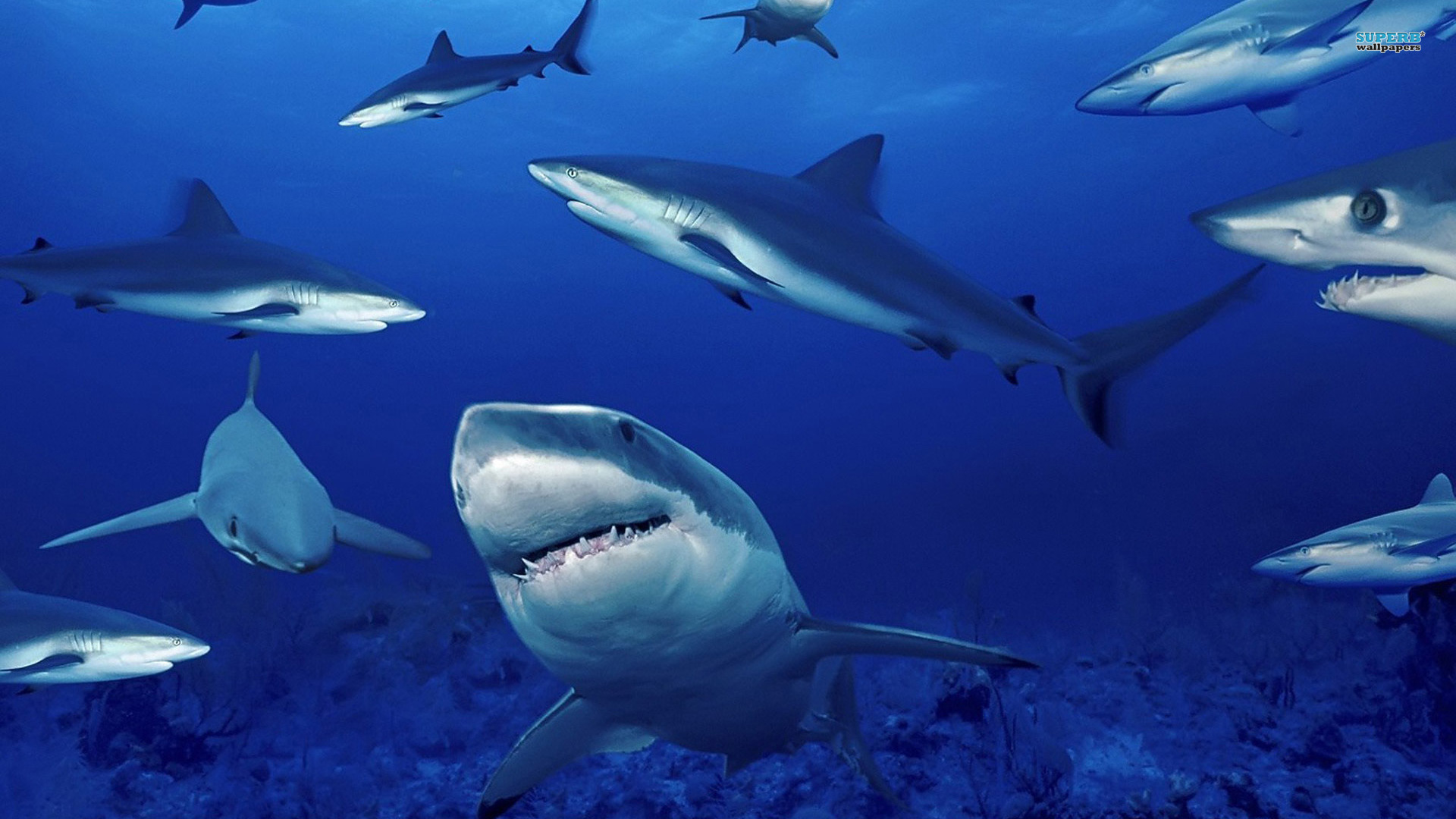 Protecting The Shark Child Friendly News