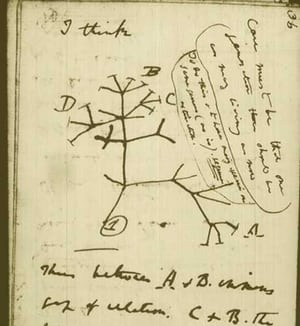 A sketch from one of Darwin's notebooks. Information we now have shows that instead of a tree of life, the map of species in the world looks more like a densely connected web.